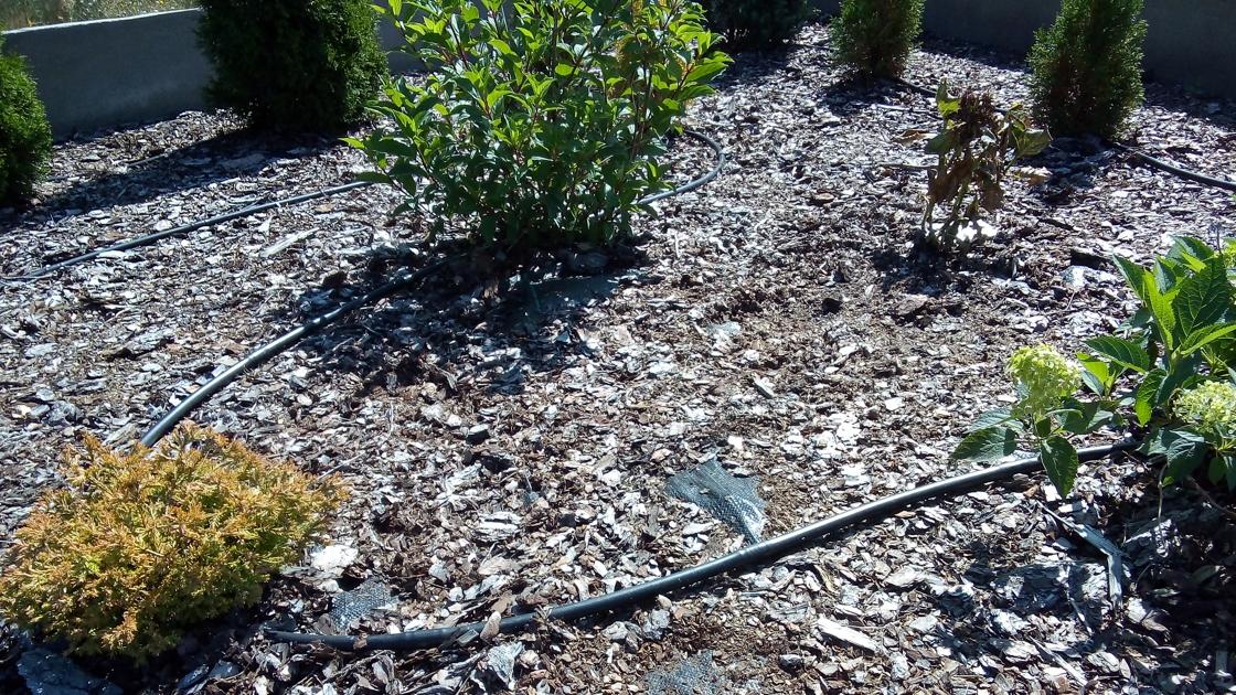 Nawadnianie rabat w ogrodzie